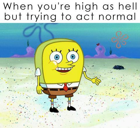 hilarious-memes-stoners-marijuana-smoking-weed_2a15cb3f-609e-4388-b276-61a508297acb_large.jpg.d3882c84399c31c39fe5f580a7618038.jpg