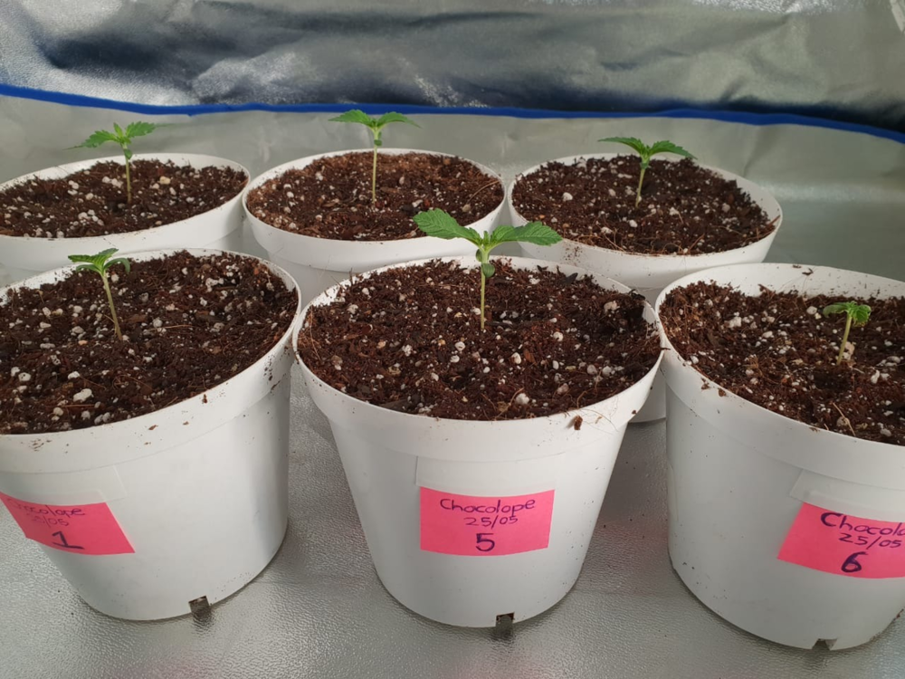 Sprouters potted Week 2 - Side pic.png