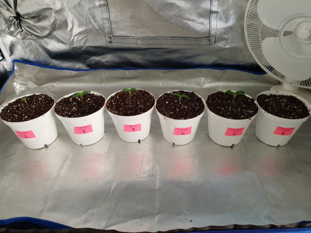 Sprouters potted Week 2.png